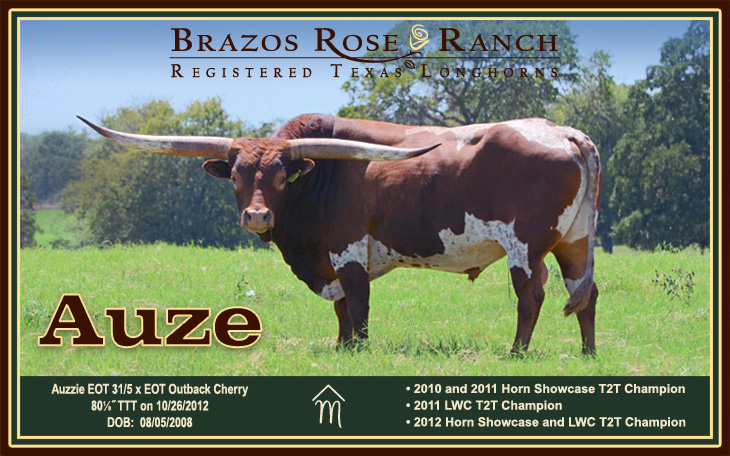 Azue from Brazos Rose Ranch at the 2012 LWC